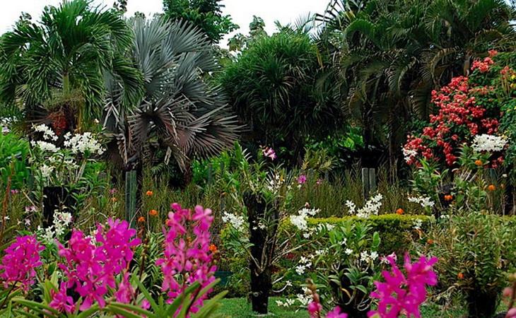 Денпасар, сад орхидей