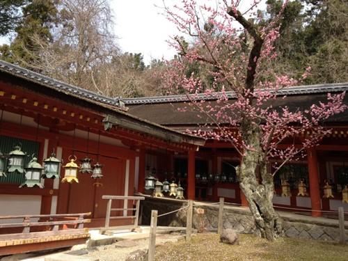 Храм Касуга