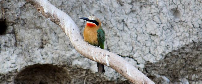 Национальный парк Mosi-Oa-Tunya (Гремящий Дым)