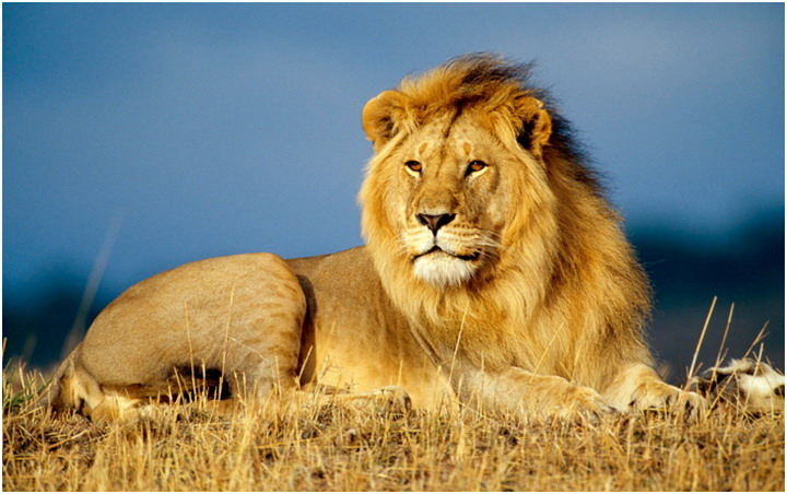 Национальный парк Танзании