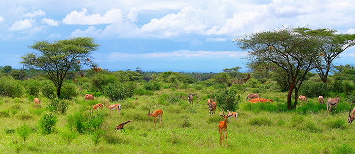 Национальный парк Самбуру