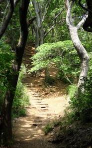 Котоку Ин, тропа Daibutsu Hiking Trail