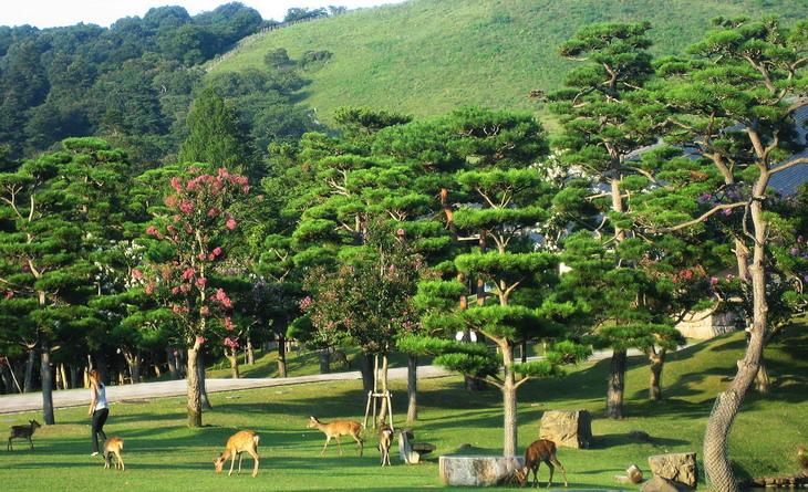 Нара, парк оленей