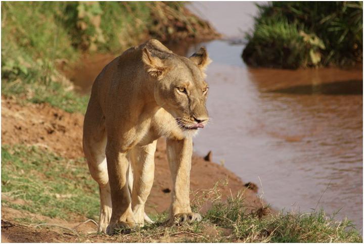 Кения, Национальный заповедник Самбуру