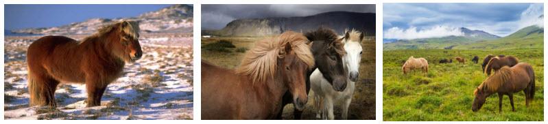 лошади викингов